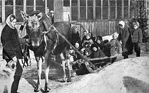 HPIM1167b moose farming in russia